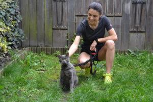 Lo et Figaro chat de caticross