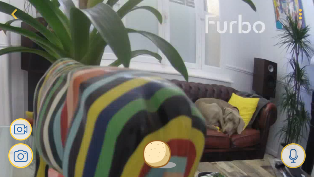 Furbo zoom canapé