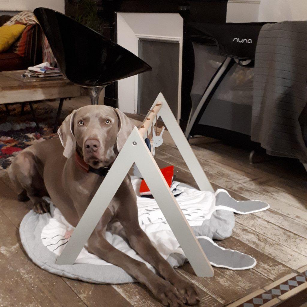 cohabitation chien nouveau né