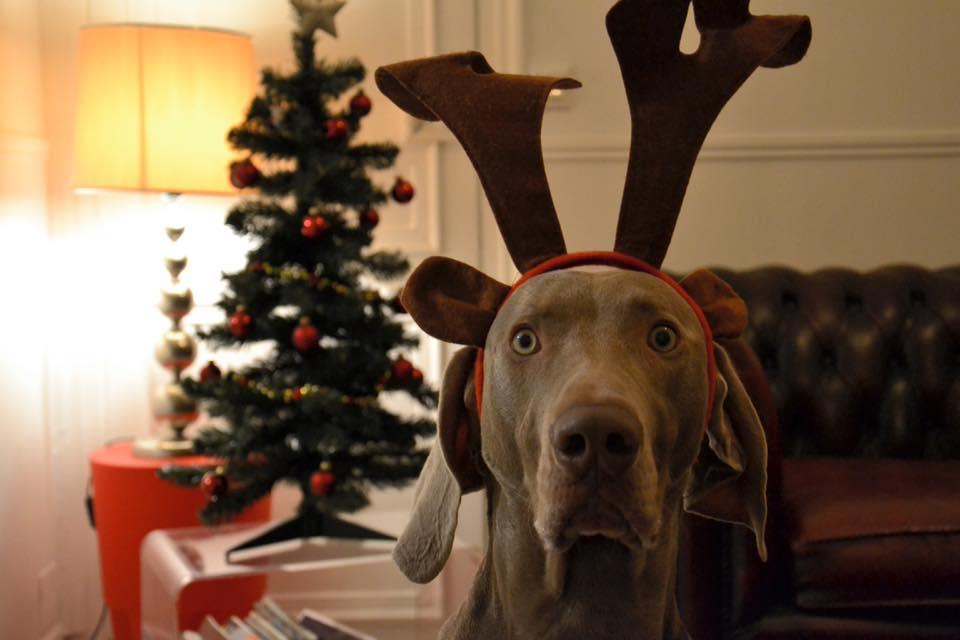 Noël cadeaux running