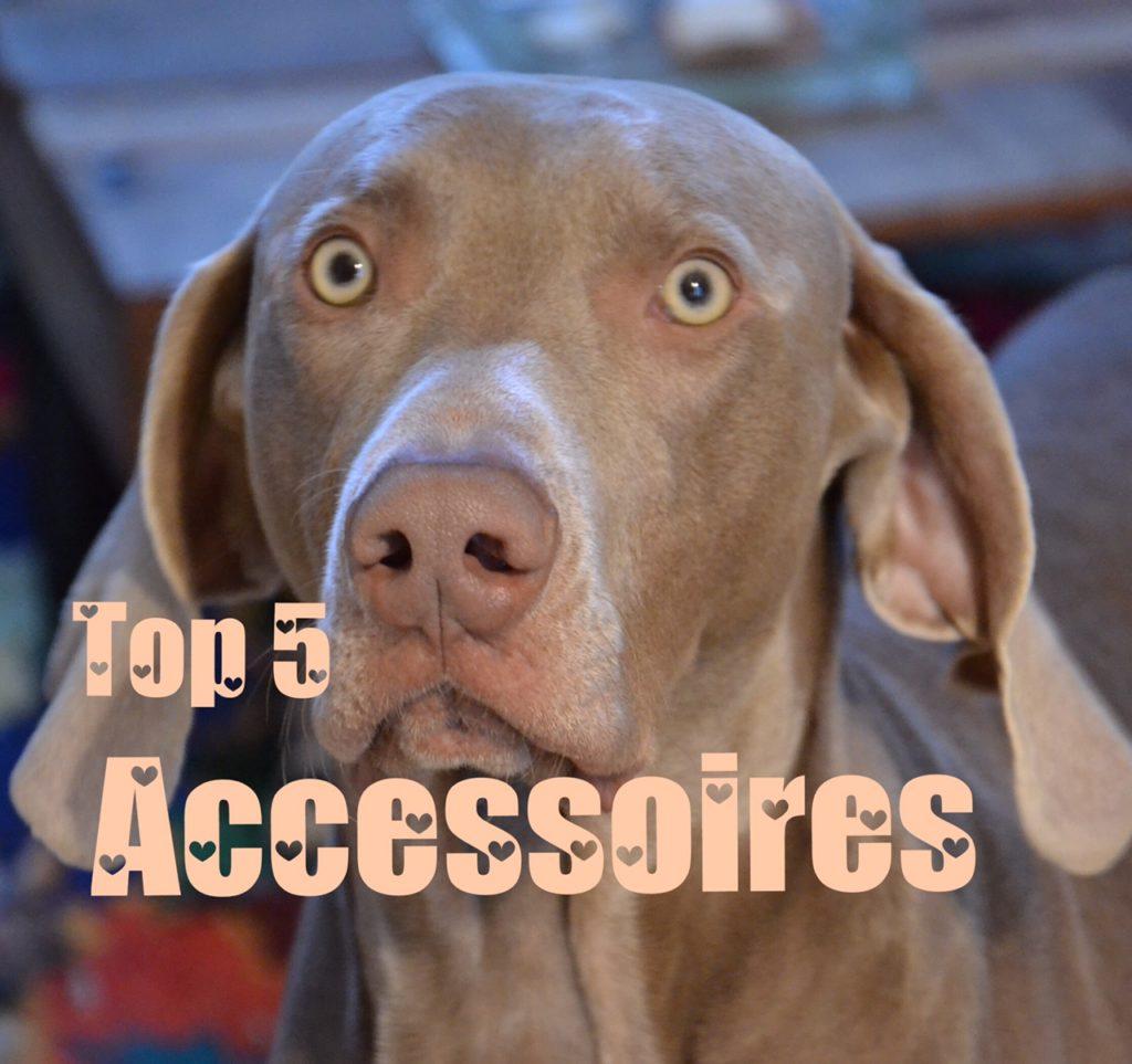 top 5 accessoires pour chien